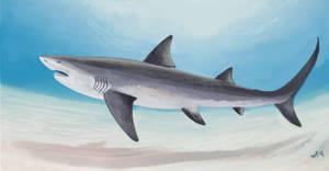 Wolverine shark