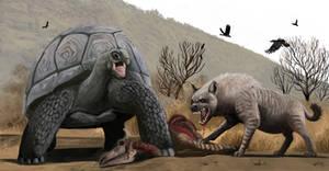 Atlas Tortoise