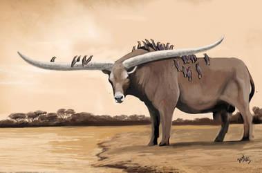 Eritrean Bull
