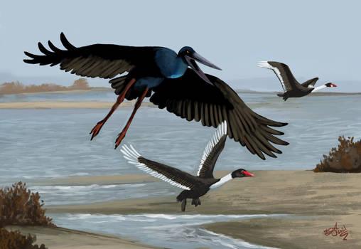 Giant Chad Stork!