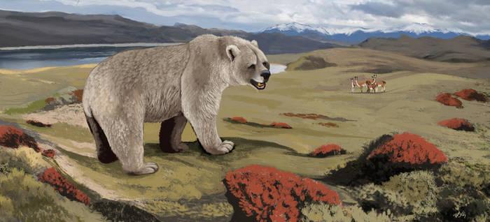 Patagonian Bear