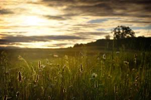 Morning Glory by tfavretto