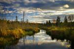 Bellevue Valley Marsh
