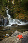 Fallen Leaves + Falling Water