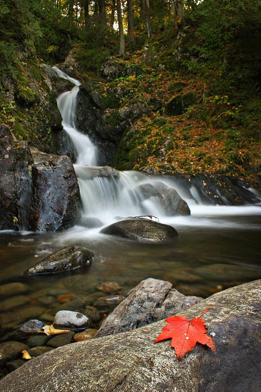 Fallen Leaves + Falling Water by tfavretto