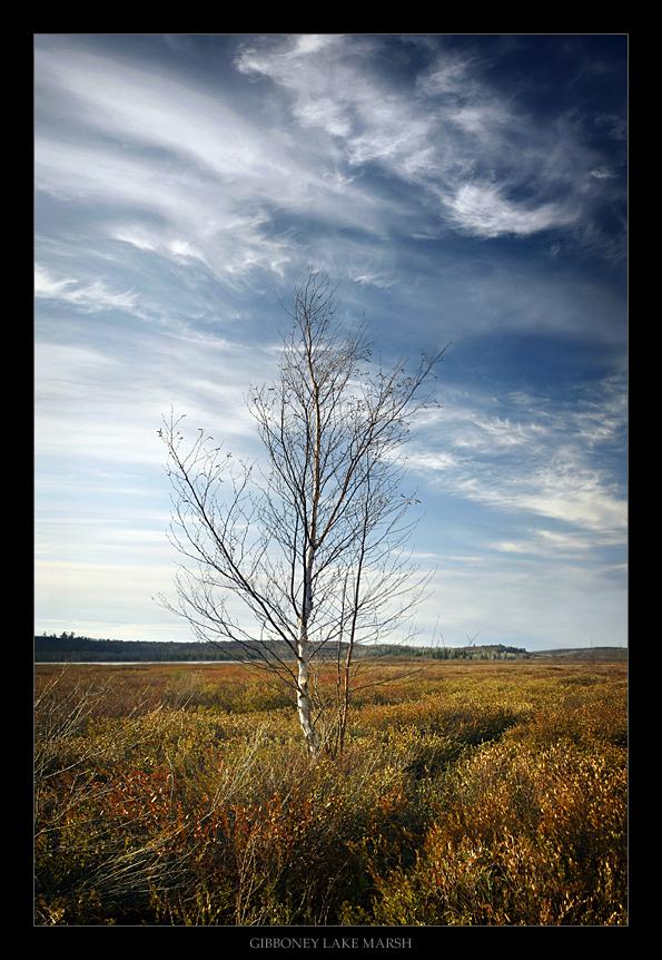 Gibboney Lake Marsh by tfavretto