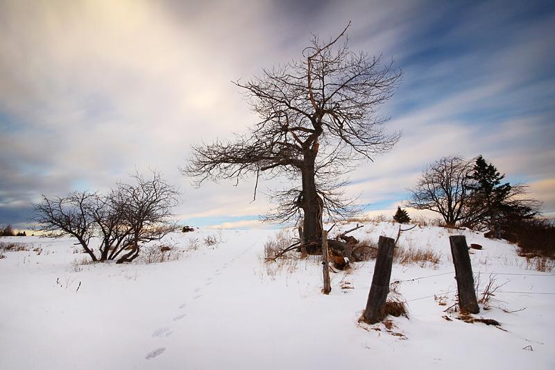 Dead of Winter by tfavretto