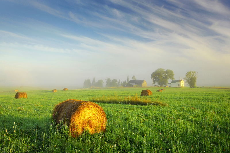 Foggy Morning in Laird Township by tfavretto