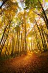 Golden Trail
