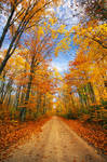 Autumn in Alger County