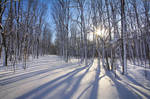 Winter on the Trail