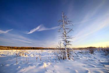 Winter Blues by tfavretto