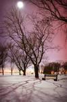 Bellevue Park by Moonlight