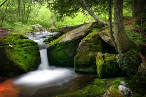 Woodland Flow by tfavretto