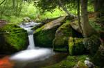 Woodland Flow