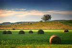 An Evening on the Farm by tfavretto