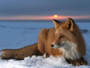 CelticTriskelionFox's Profile Picture