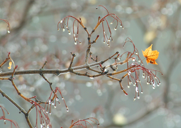 First Rain, Last Leaf by BeauNArrow