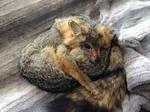Grey Fox Plushie