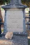 Cat in the cemetery