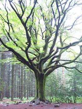 Merlin's tree