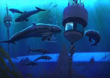 Cetacean Ops aboard the USS Ross