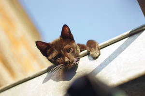 Ceiling Cat is Watching You... by jaruworks