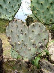 Metaphor of thorns
