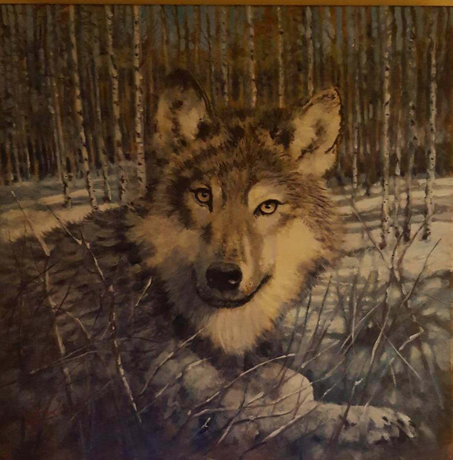 A wolf snow scenewip