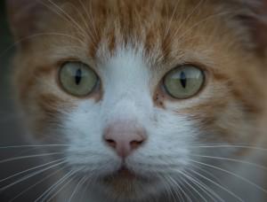 utsugami's Profile Picture