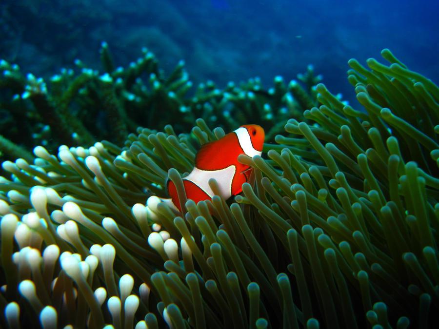 Bali1 by cylia522