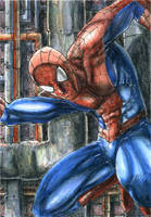 Spiderman Commission by DKuang