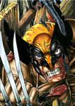 Wolverine ATC Colors
