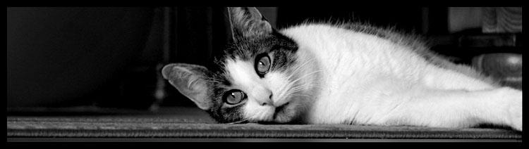 kitty's dreams come true by mattzee