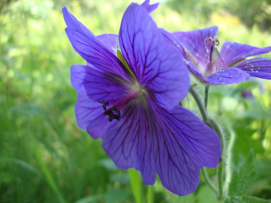 nice photo flower  flower, Beautiful flower