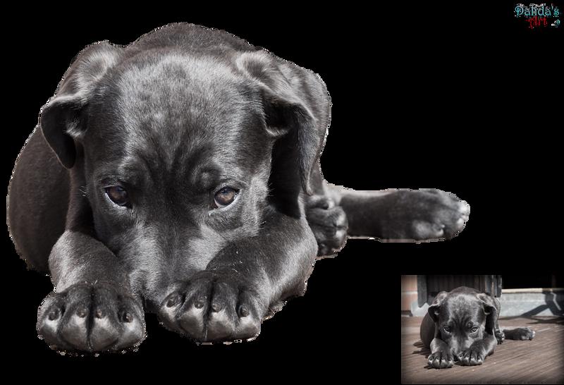 Animals - Portrait of cute pet PNG