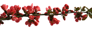 Flowers - Branch with buds PNG