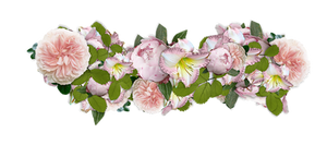 Flowers - PNG