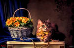 With A Basket Of Primula By Daykiney