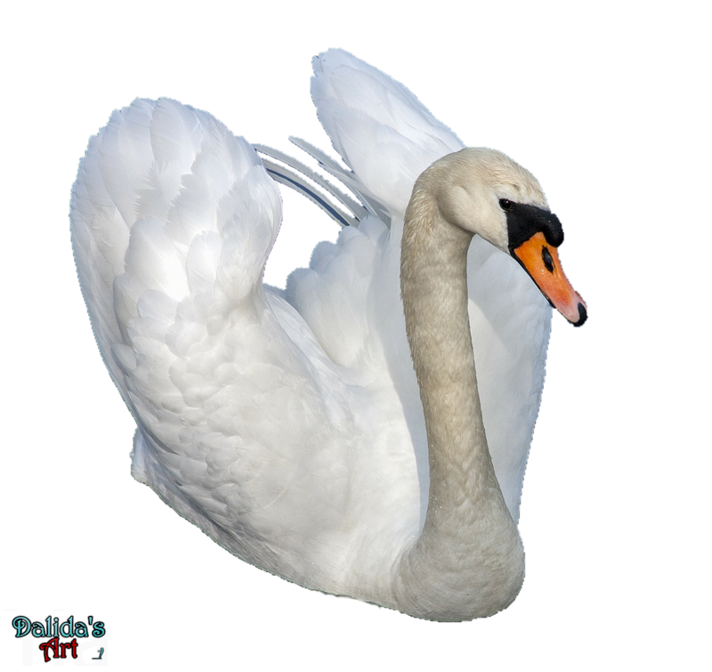 Swan (2) PNG