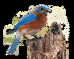 Bluebird PNG