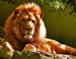 Lion -The king
