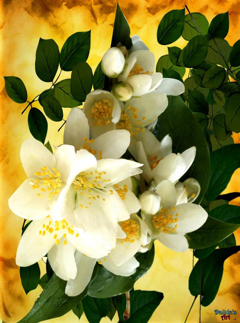 Jasmine Flower By Makiskan On Deviantart