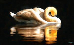 Swan by makiskan