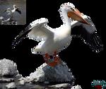 Pelican PNG