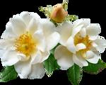 White-Flowers