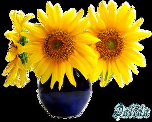 Sunflower-2 by Dalidas-Art