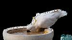 Parrot Sulphur -Cockatoo png