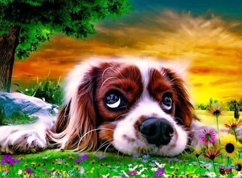 Sad Puppy Waiting
