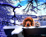 Dog In The Snowy Landscape